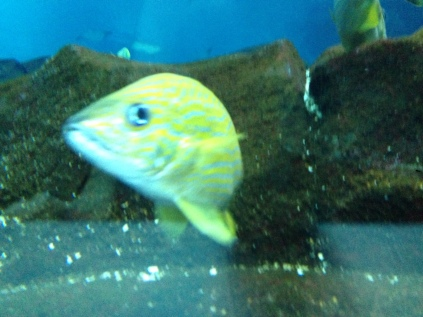 "Why do all fish make the ""nemo"" face when you go to take their photo?"